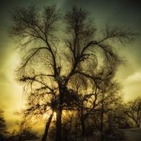 Baroque Tree Silhouette | Blurbomat.com