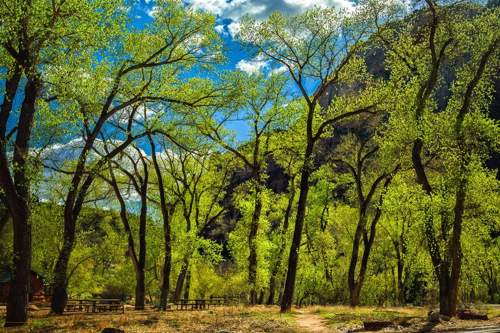 Grotto – Zion National Park
