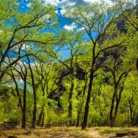 Grotto - Zion National Park   Blurbomat.com