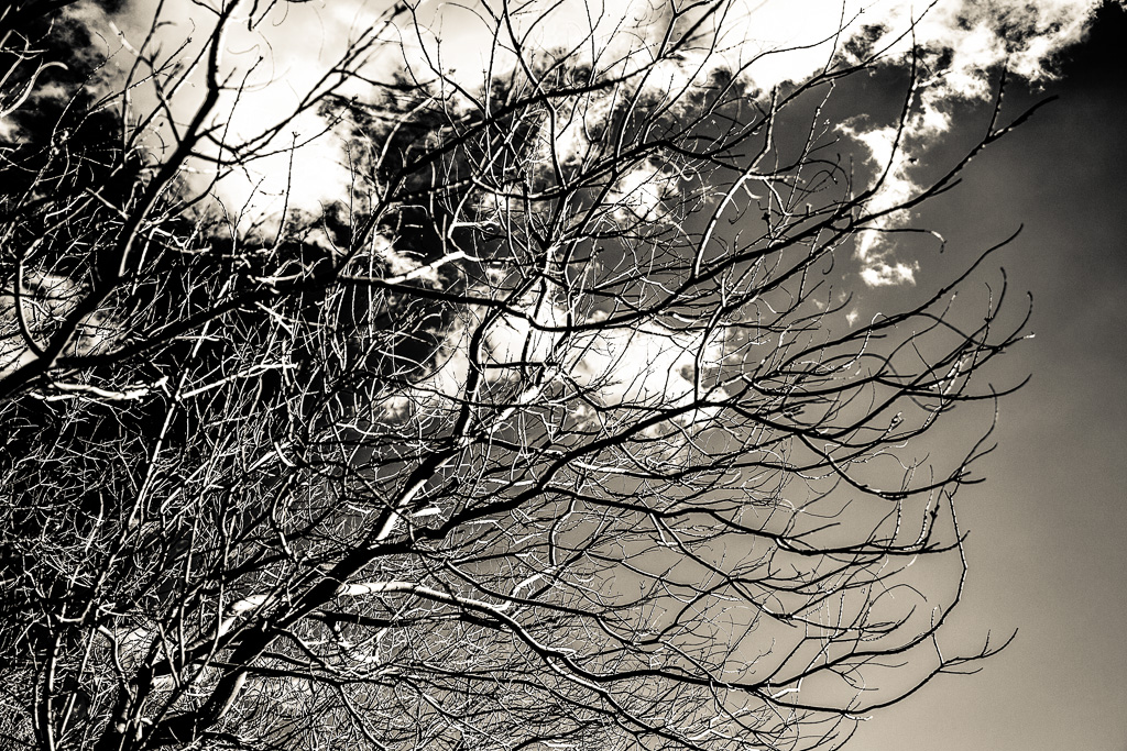 Twiggy – High Contrast Branches