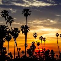 Palm Sunset - Sun setting along the Laguna Beach coast in Southern California.   Blurbomat.com