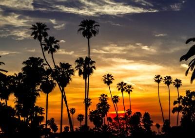 Palm Sunset - Sun setting along the Laguna Beach coast in Southern California. | Blurbomat.com