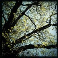 Contrast Tree | Blurbomat.com