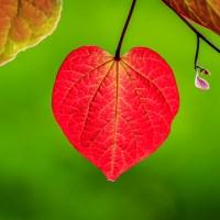 Heart Song - Image   Blurbomat.com