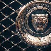 Jaguar Grill | Blurbomat.com