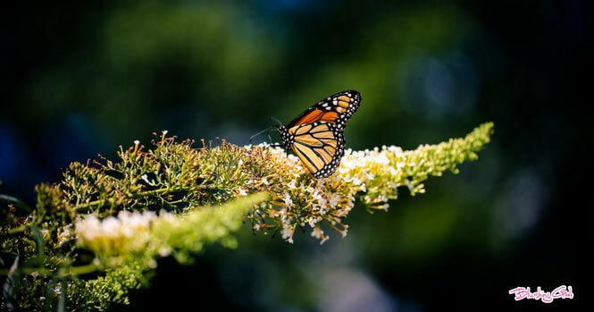 Jumalon Butterfly Sanctuary and Art Gallery | Blushing Geek