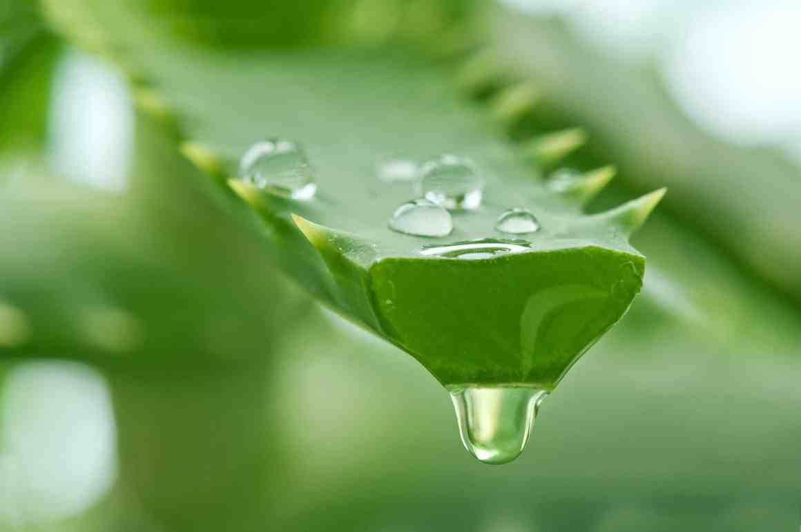 Get Glowing, Smooth And Clear Skin Just By Using Aloe Vera Gel. 2