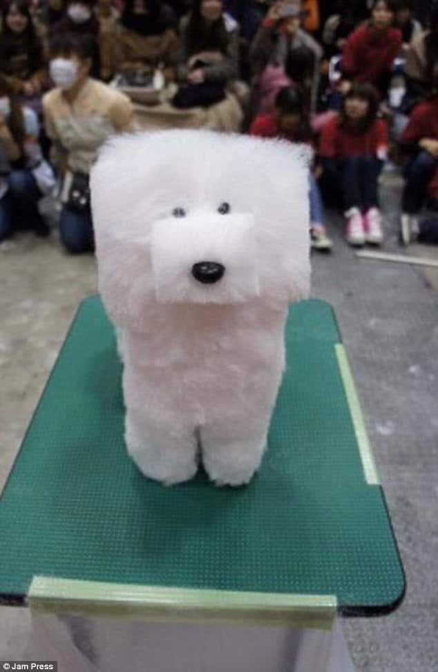 Pet Haircuts Went Wrong, It's Hilarious