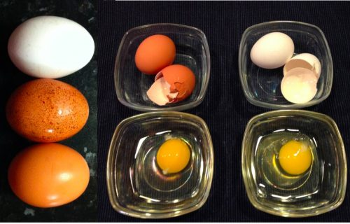 Brown eggs vs white eggs which one is good