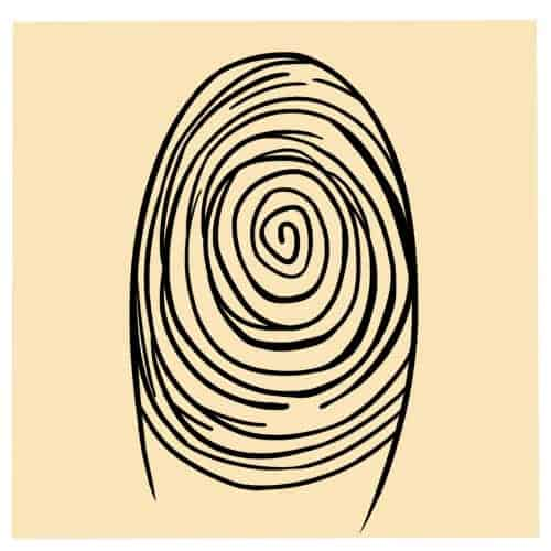 Spiral Whorl
