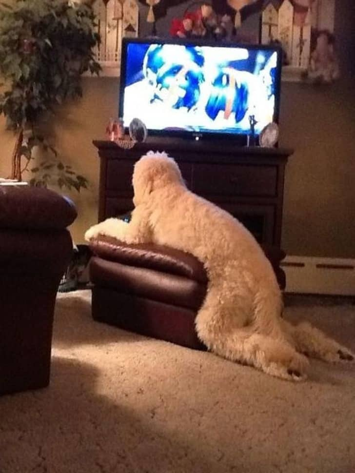 Humanlike Dogs Who Has Left Us Stubborn 7