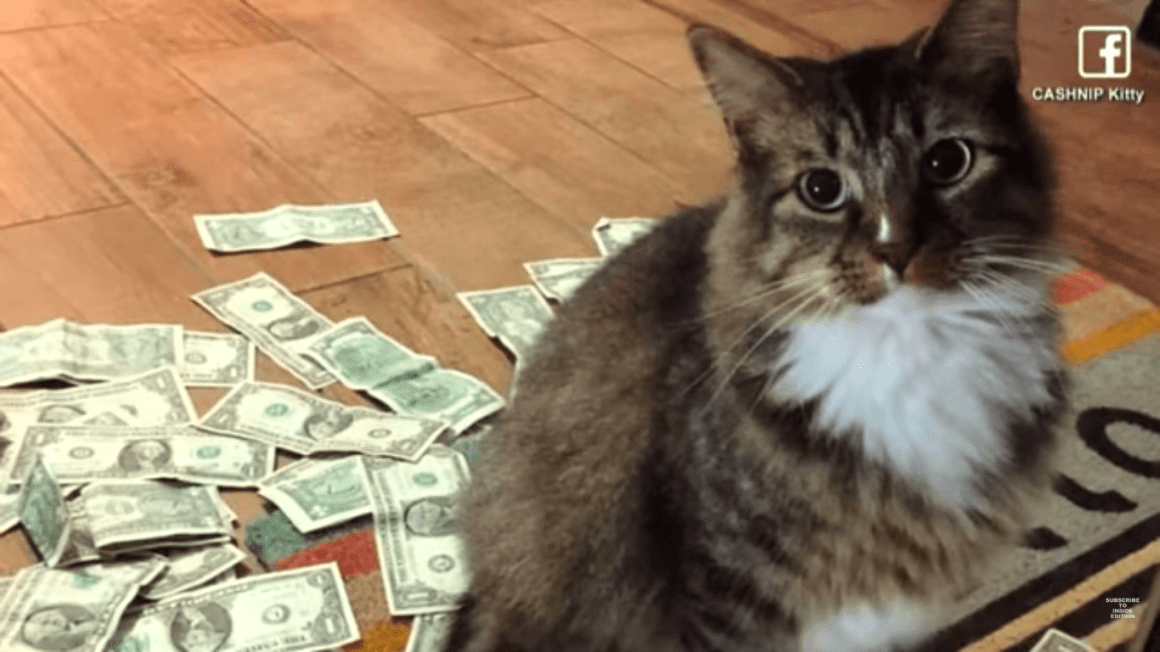 Cat Collects $1 From Each Passerby To Donate 1