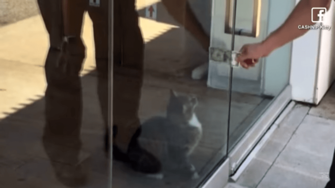 Cat Collects $1 From Each Passerby To Donate 5
