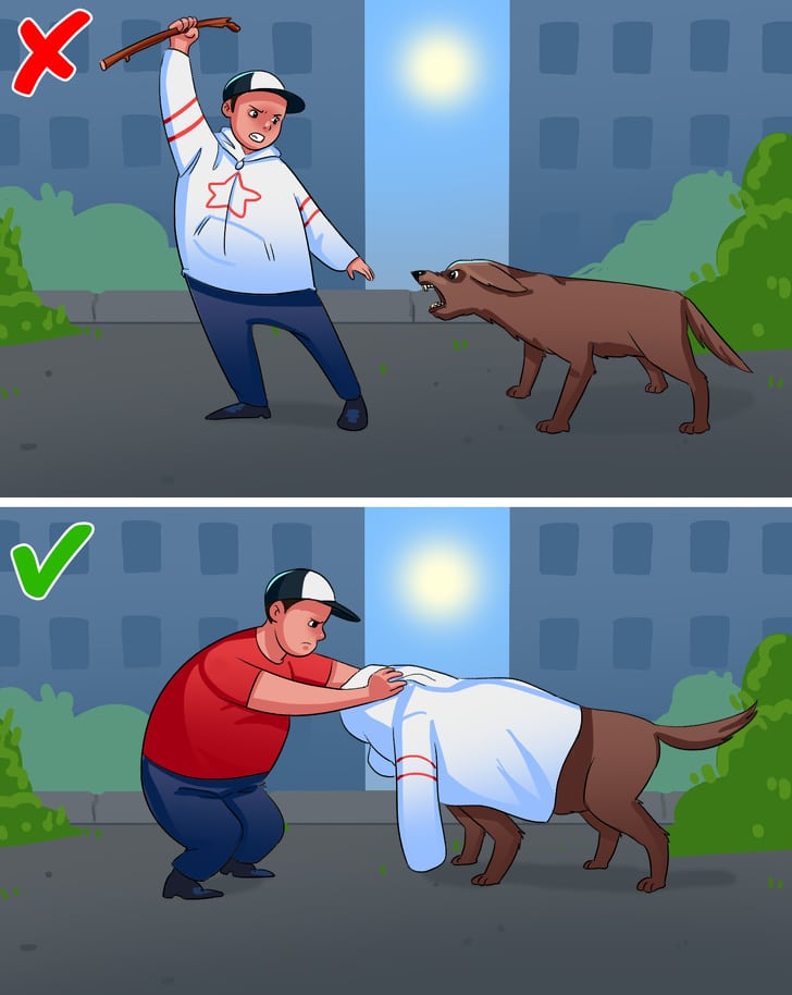 10 Best Things To Protect Yourself If You Are Attacked By The Dogs 3