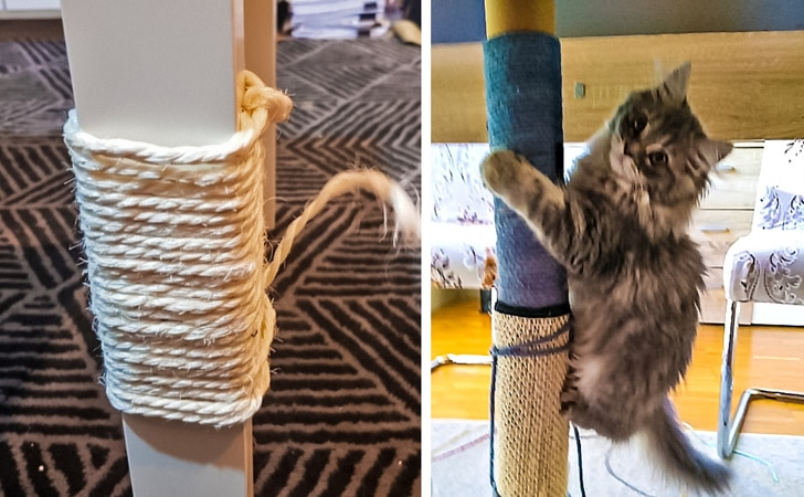 10 Best Life Hacks That Will Make Life Easier Of The Cat Owner 10