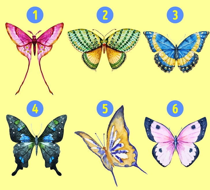 6 Hidden Facts Regarding Personality With The Choice Of Butterfly You Like 2