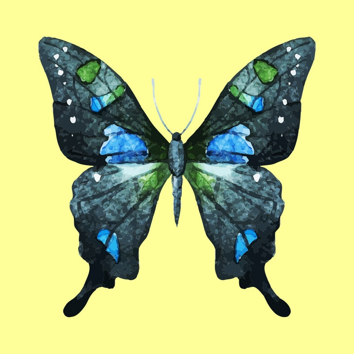 6 Hidden Facts Regarding Personality With The Choice Of Butterfly You Like 6
