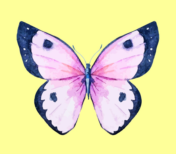 6 Hidden Facts Regarding Personality With The Choice Of Butterfly You Like 8