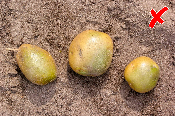 Check Out The Results Of Eating Potatoes Every Day 6