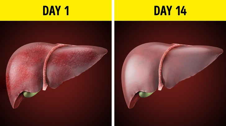 Changes That You Usually See After You Stop Drinking Alcohol From Last 28 Days 4