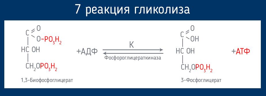 Blutzucker AKTIV средство от диабета - UZ (Узбекистан)