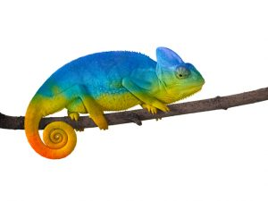 Gold Is a Chameleon | BullionBuzz