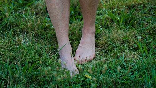 grass2web