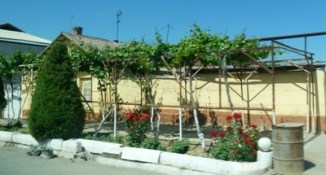 Grape vine in front of house in Turpan, China