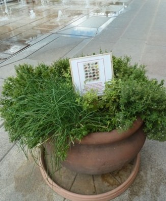 Herbs in square in Pecs, Hungary