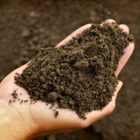 The What and Why of Compost