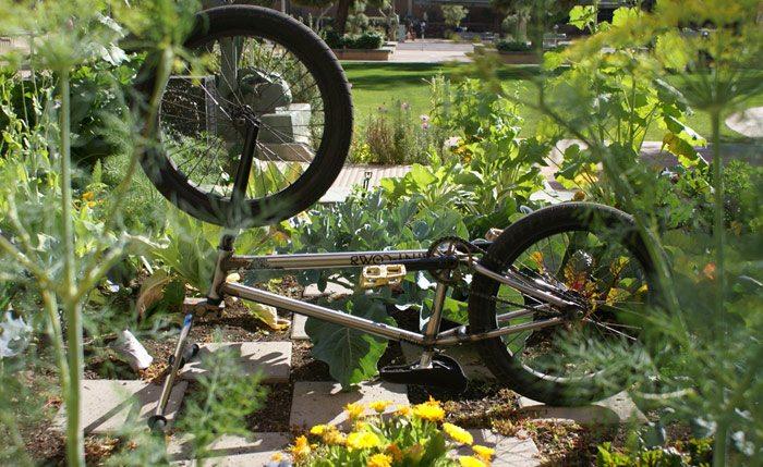 jeff-wescott-bmx-bike-check-mutiny-bikes-comb-garden
