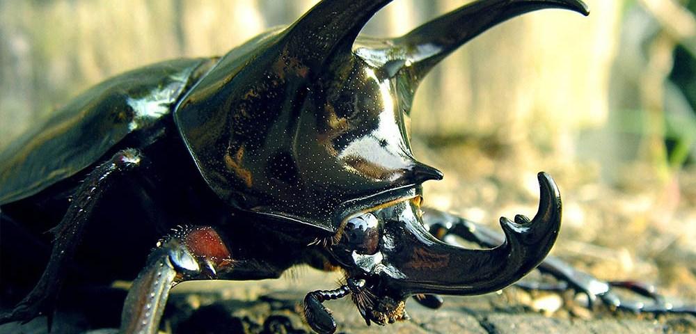 Искусство выживания. Глава 4.8: Защита от животных - простые организмы и насекомые