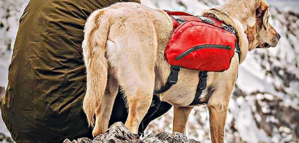 Набор для выживания собаки - всё, что понадобится вашему питомцу