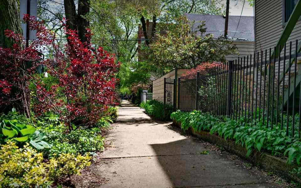 Съедобные растения - 5 полезных сорняков, которые можно найти в любом городе