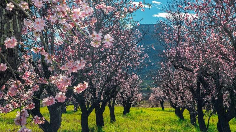 Bloesems, voorjaar, Costa Blanca, B&B, Casa Asombrosa