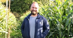 Jay in a Kentish cornfield