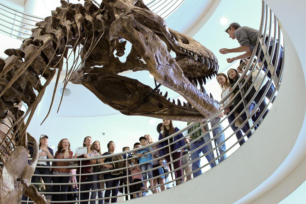 Tour stop at the T. rex