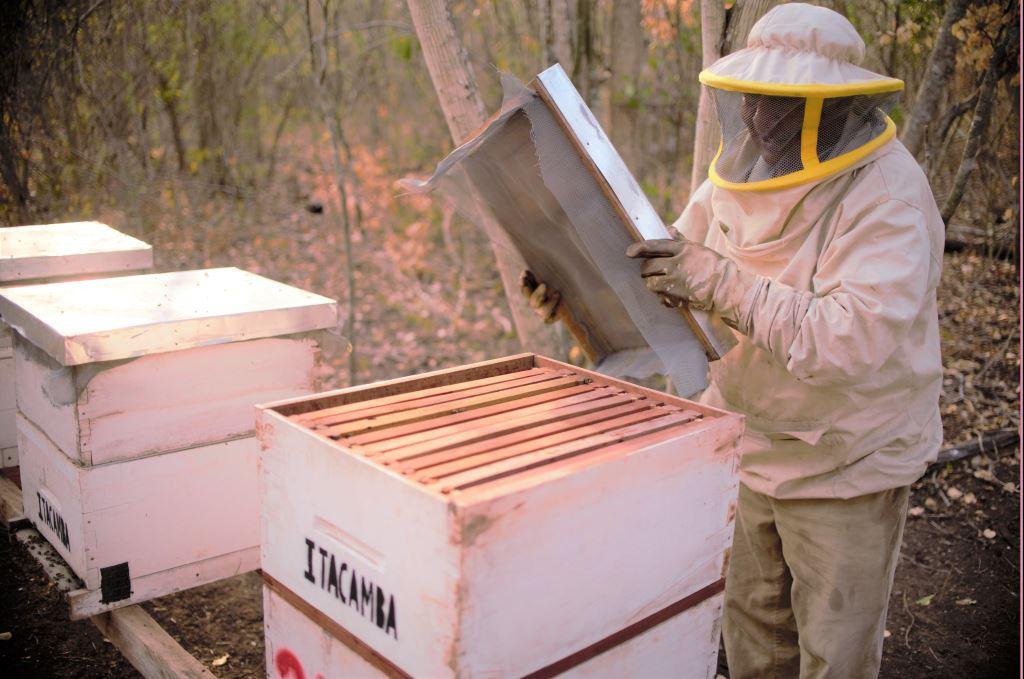 Itacamba apoya la incubación de negocios con peces, verduras y abejas para unas 15 familias