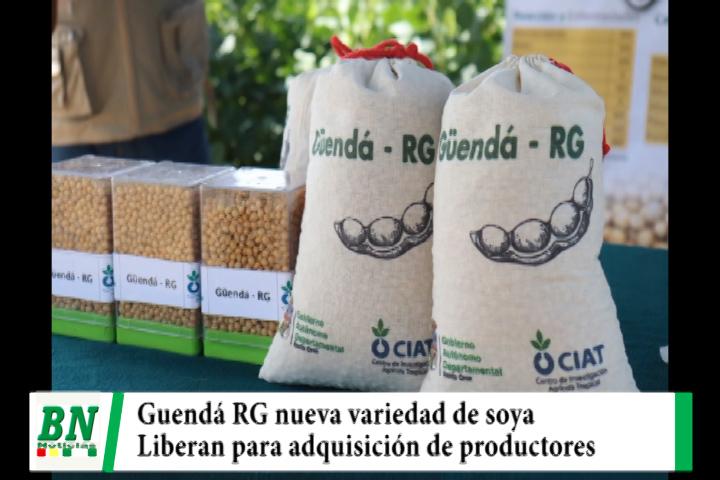 CIAT libera una nueva variedad de soya llamada Guendá RG y los productores podrán adquirirla