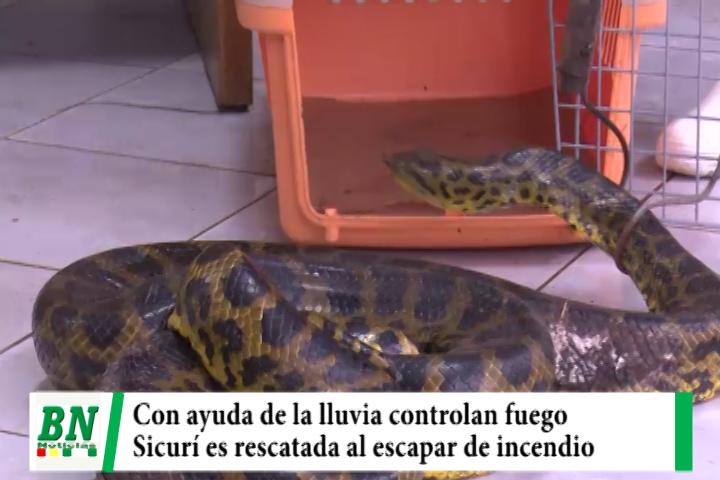 Controlan incendios en La Chiquitania con ayuda de lluvias y trabajan en otros, rescatan a Sicurí