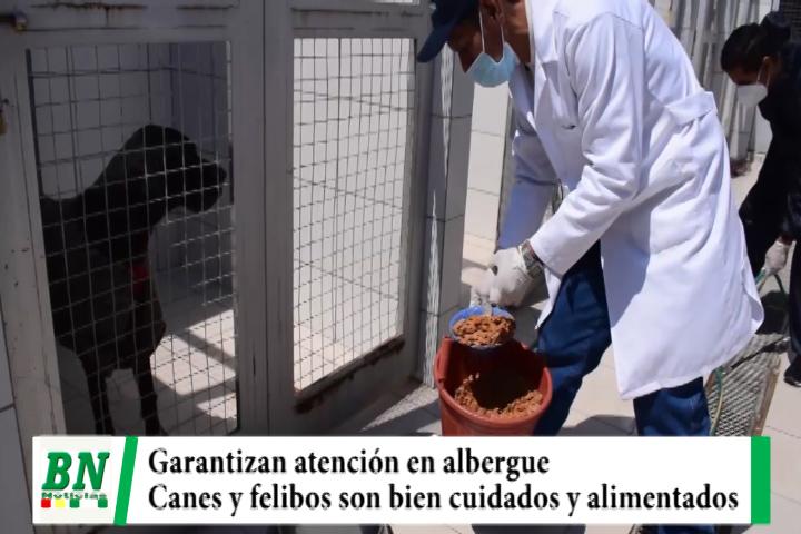 Municipio garantiza atención veterinaria y alimenticia a canes y felinos en albergue