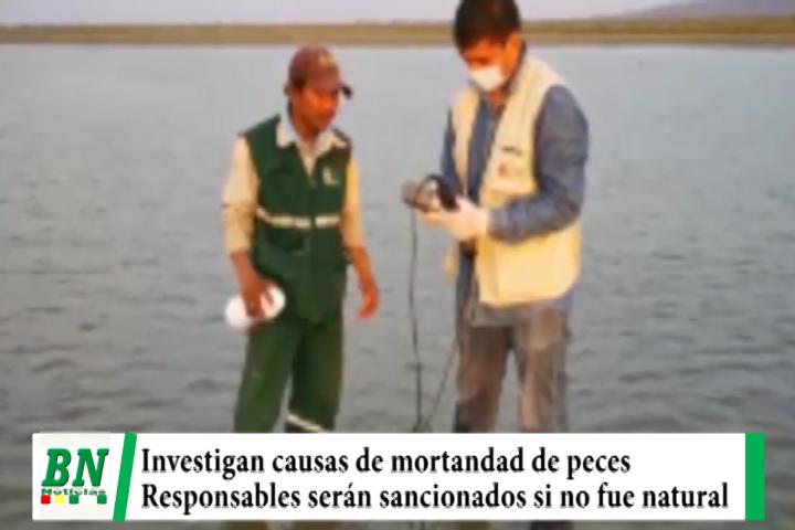 Equipo técnico investiga causa de mortandad de peces y sancionarán a responsables