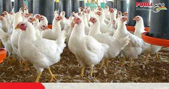 Productores Avícolas sostienen que venden huevos y pollos totalmente inocuos