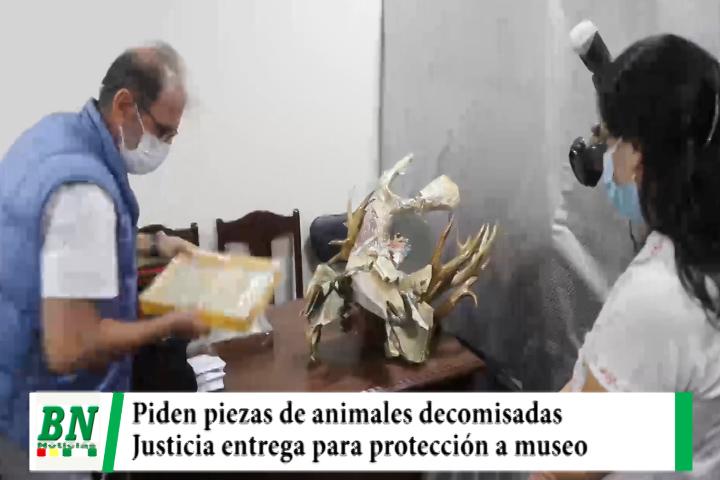Justicia entrega piezas de animales silvestres decomisadas a extranjero y serán puestas en museo
