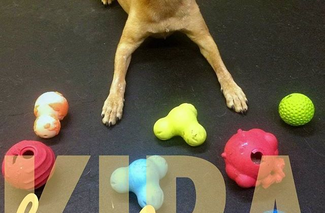Kira is one of many daily toy testers from our daycare