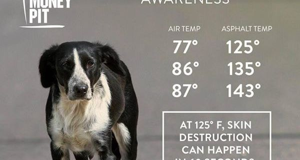 Dog Paw Safety in the Hot Summer Months