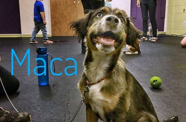 From Barks and Recs Instagram…Puppy Class: Maca (Princess Macadamia) was extremely happy