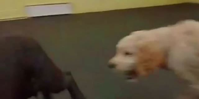 From Barks and Recs Instagram…Leila's First Day of Daycare!
