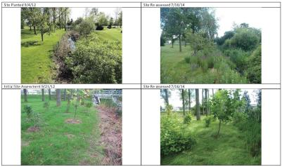 An example of a riparian restoration project completed during Phase 1 of the Living Shoreline program. The images show before (left) and after (right) conditions at a site located near Grand Island's town commons. The end result is a functional riparian buffer, offering habitat that is both beautiful and beneficial.