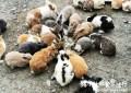 屏東。內埔》蕭家大院兔子親子餐廳。爆炸可愛的兔子密集恐懼